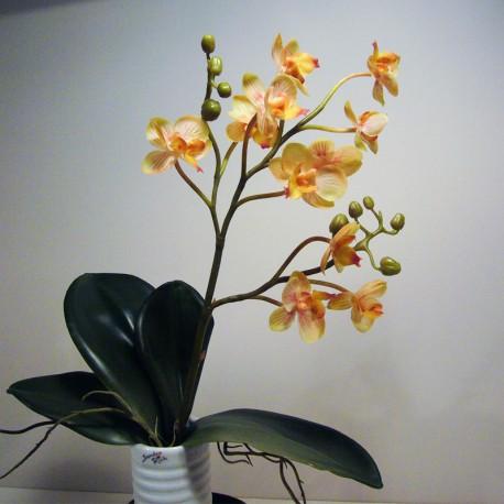 Orchidee gelb